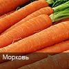 i-morkov